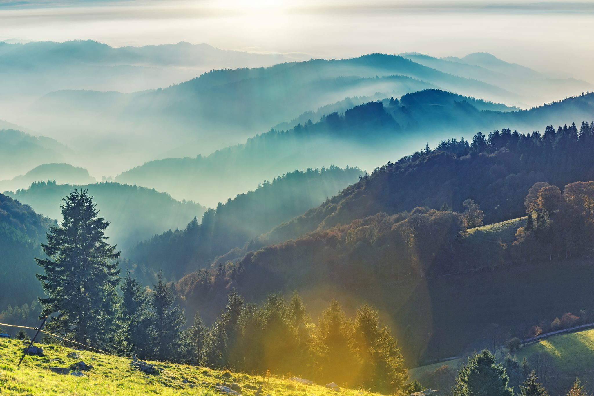 Detox, Verjüngung, Wellness im Schwarzwald